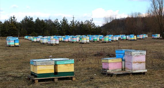 Бджолиний сезон 2019 – розпочато!